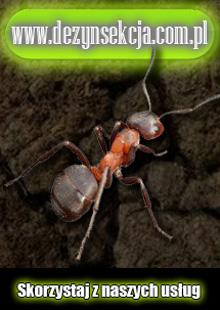 Mrówa